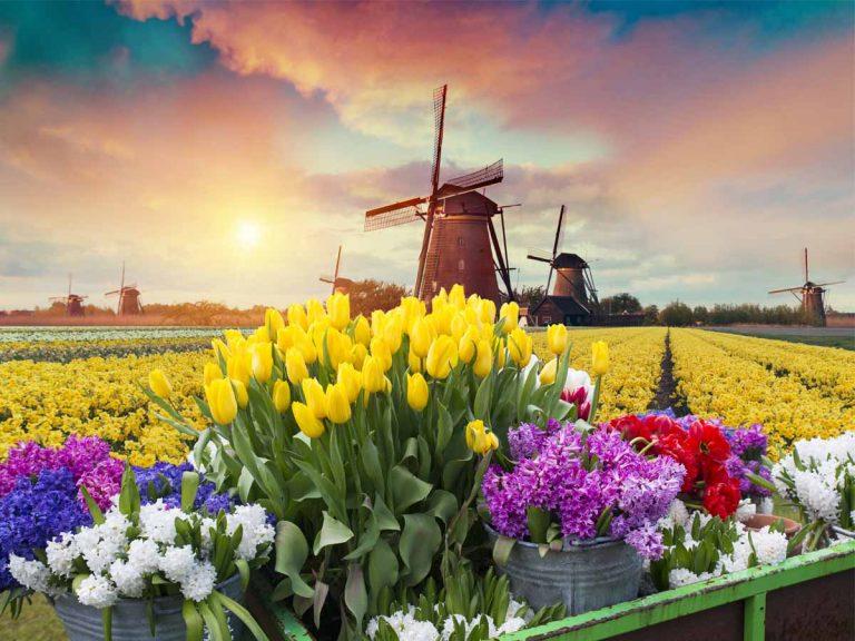 Nederlandse dividend aandelen